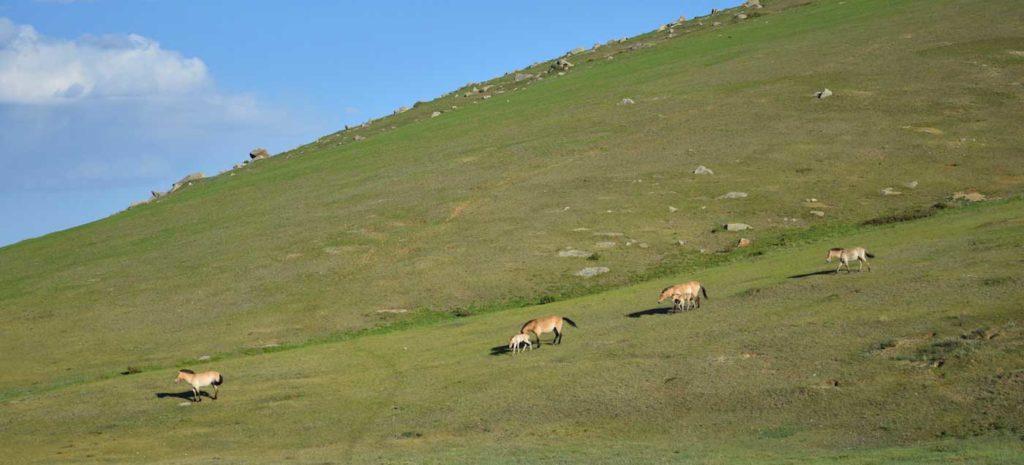 Mongolische Steppe